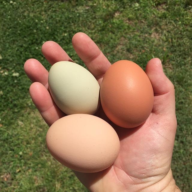Braune Weiße Eier